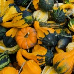 Mill City Market Gourds