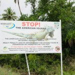 Iguanas not welcome