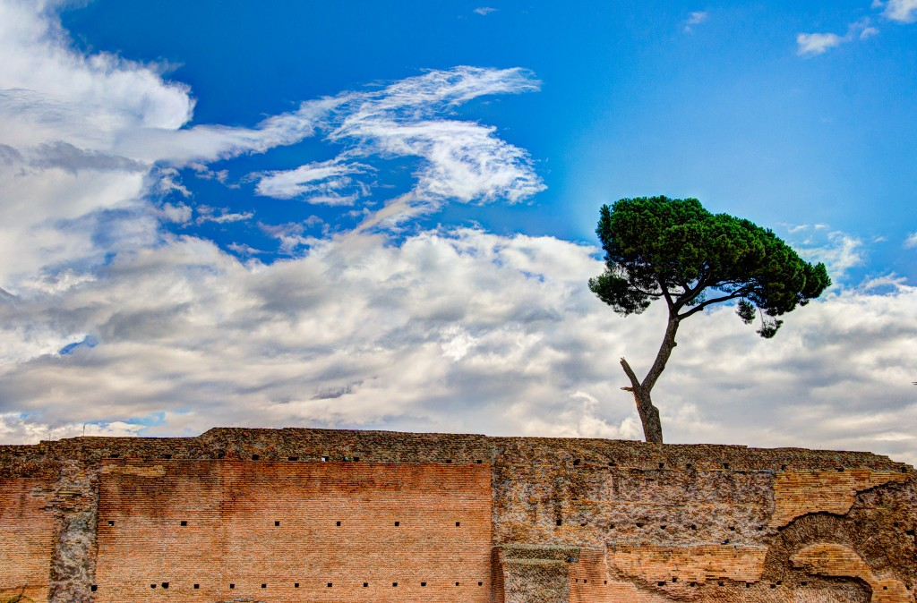 A tree grows on Palatine Hill
