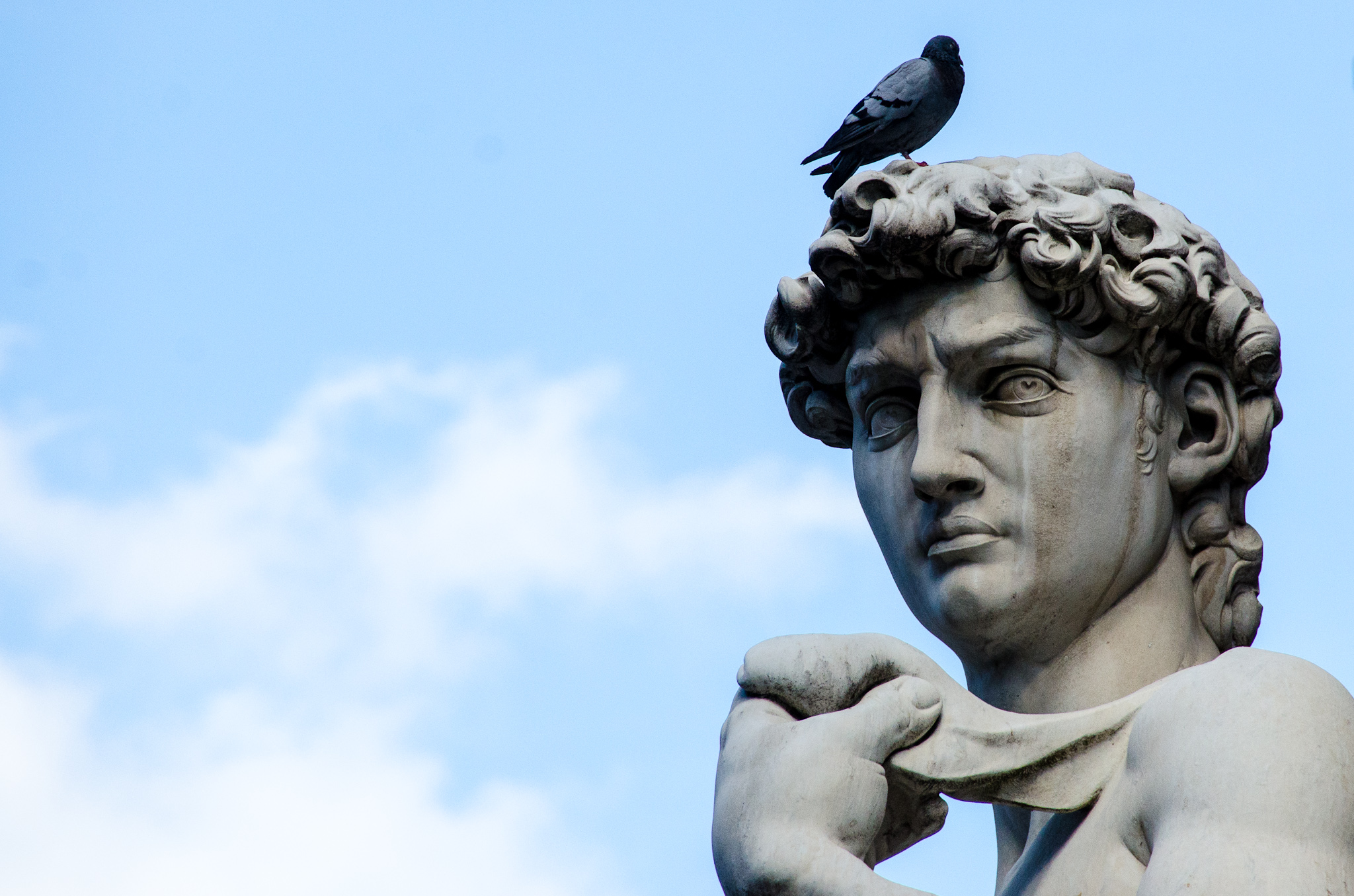 Or, like this pigeon, you can just go on the nearest statue